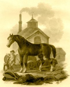 A drayhorse in 1799